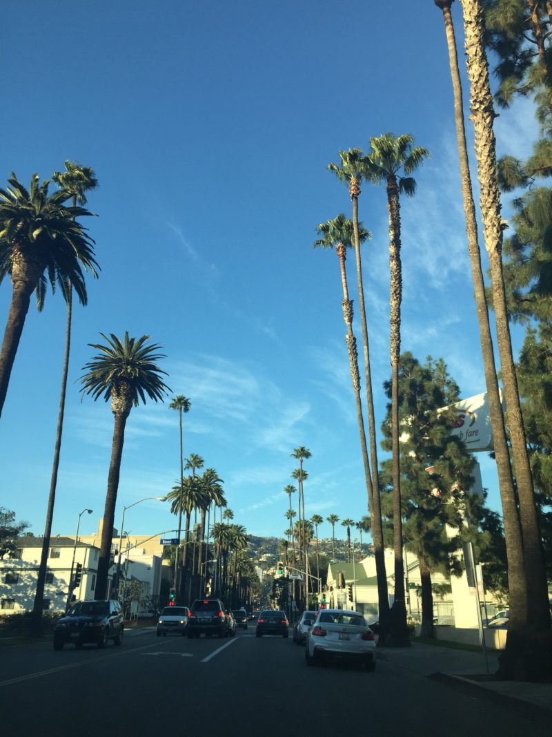 Los Angeles blue sky and palms